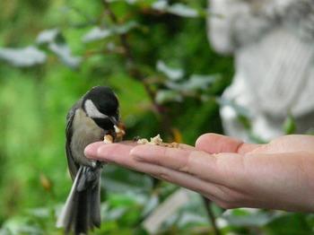 鳥に餌をやる手.jpg